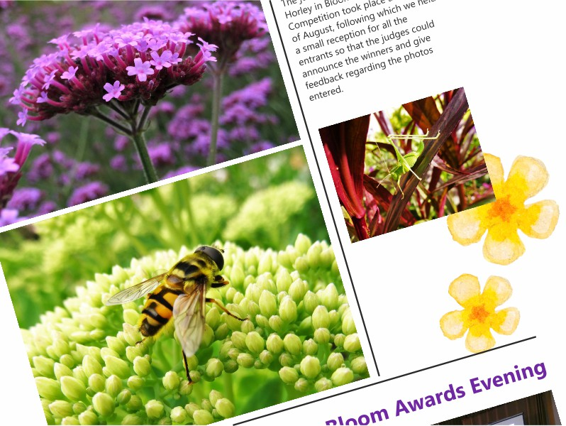 Looking for brochure design in Surrey and Sussex?