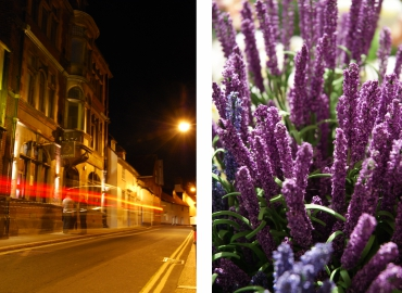 lavender and street